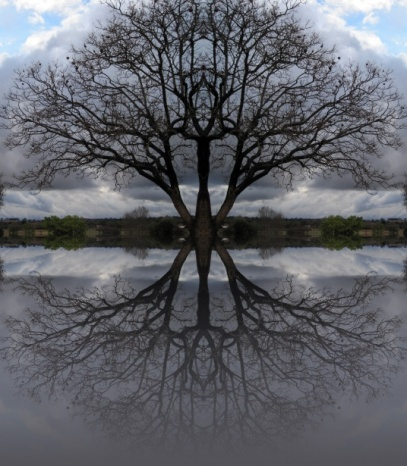 double-tree-reflection